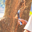 Stock Photo: Logger cutting wood