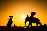 Silhouette action of elephant in countryside Ayutthaya province, thailand — Stock Photo