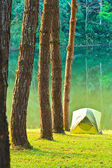 Camping in the forest pine — Stock Photo