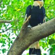 Great hornbill — Stock Photo #28437785