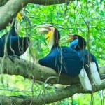 Great hornbill — Stock Photo #28438213
