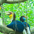 Great hornbill — Stock Photo #28438301