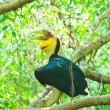 Great hornbill — Stock Photo #28438387