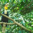 Great hornbill — Stock Photo #28439335