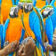 Macaw parrot — Stock Photo #28440339