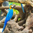 Macaw parrot — Stock Photo #28440529