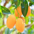 Maprang Marian Plum and Plum Mango thailand — Stock Photo #28827293