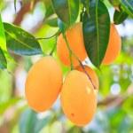 Maprang Marian Plum and Plum Mango thailand — Stock Photo