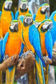 Macaw papegoja — Stockfoto