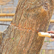 Stock Photo: Logger mcutting wood