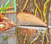 Logger man cutting wood — Stock Photo