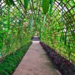 Stock Photo: Green tunnel