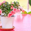pink flowers — Stock Photo