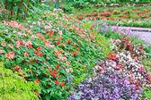 Güzel çiçekler — Stok fotoğraf
