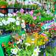 Flowers in flower market — Stock Photo #36548517