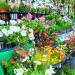 Flowers in flower market — Stock Photo