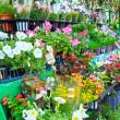 Flowers in flower market — Stock Photo