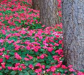 лесные цветы — Стоковое фото