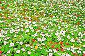 森林花 — 图库照片