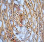 Group of silkworm cocoons nests — Fotografia Stock