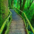 Stock Photo: Tropical rain forest path