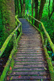 Tropical rain forest path — Stock Photo
