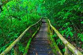 Tropical rain forest path — Stock Photo