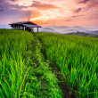 Paddy Green sunset — Stock Photo
