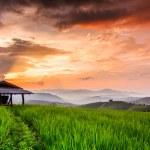 Paddy Green sunset — Stock Photo #37143783