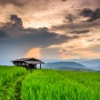 Paddy Green sunset — Stock Photo #37145383