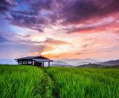 Paddy Green sunset — Stock Photo