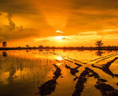 Water reflection during sunset — Stock Photo