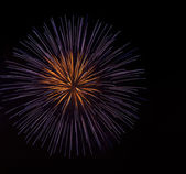 Colorful firework — Stock Photo