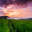 Paddy Green sunset view — Stock Photo #37285425