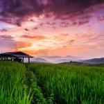 Paddy Green sunset view — Stock Photo