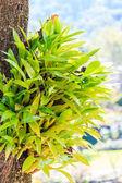 Zelený orchideje na stromě — Stock fotografie