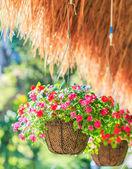 Petunias — Stock Photo