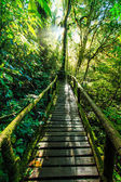 Passage in the primeval forest — Stockfoto
