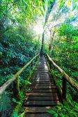 Geçit ilkel orman — Stok fotoğraf