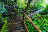 Passage in the primeval forest — Stock Photo