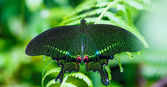 Green butterfly with green background — Stock Photo