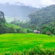 Green Terraced Rice Field — Stock Photo #37428413