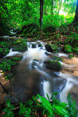 Waterfall in rainforest — Stockfoto