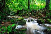 Vodopád v deštném pralese — Stock fotografie