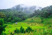 Green Terraced Rice Field — ストック写真