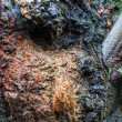 Flying squirrel nest from tree trunk hole — Stock Photo