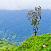 árboles en la montaña — Foto de Stock