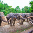 Asia elephant — Stock Photo