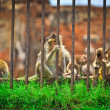 Monkeys inside cage — Stock Photo