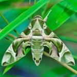 ������, ������: Moth Guard Month